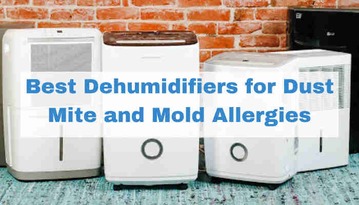 Best Dehumidifiers for Dust Mites and Mold Allergies
